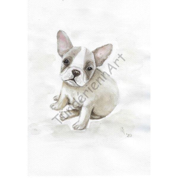 Kutya kép - Francia bulldog