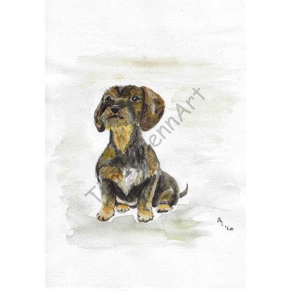 Kutya kép - Szálkásszőrű tacskó