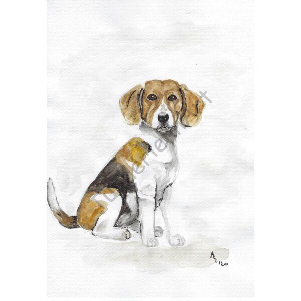 Akvarell festmény: Beagle