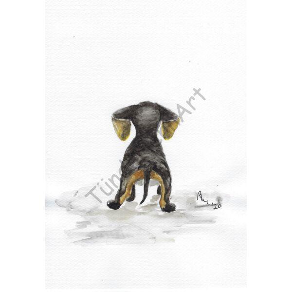 Kutya kép - Tacskó